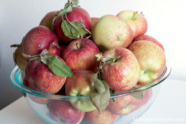 Apples from the tree - blossomsandposies.com