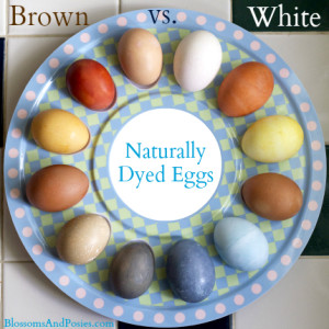 naturally dyed eggs (brown vs white) - blossomsandposies.com