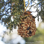 Make a pinecone bird feeder with your favorite little person! This is a great hands on craft for winter!